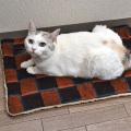 猫のエコホットマット チェック オレンジ系