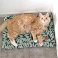 猫のエコホットマット リーフ グリーン