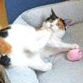 猫のボールおもちゃ