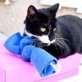猫のキャットニップおもちゃ