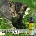 猫のフラワーレメディ講座1