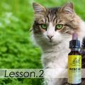 猫のフラワーレメディ講座2