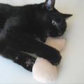 猫型キッカーと猫ノア