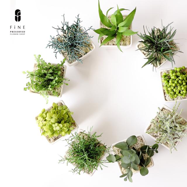 グリーンポット|インテリアグリーン/プレゼント/ギフト/開店祝い/観葉植物/新築祝い【有料バッグ:ワイドS対応】