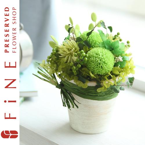 アーストーン|インテリアグリーン/ギフト/プレゼント/開店祝い/結婚祝い/新築祝い/引越し祝い【有料バッグ:M対応】