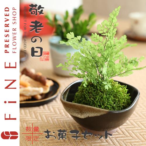 敬老の日ギフト/和風アレンジプリザーブドフラワー「ぷり盆栽」盆栽/送料無料