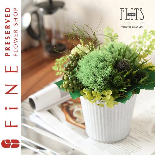 フリッツ|インテリアグリーン/新築祝い/開店祝い/開業祝い/開院祝い【有料バッグ:M対応】