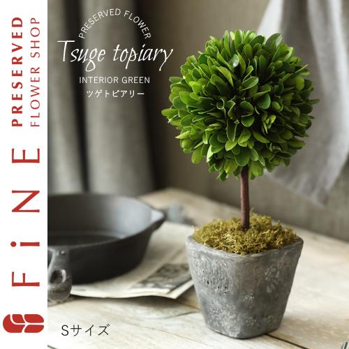 プリザーブドフラワー/枯れない観葉植物・ツゲトピアリー