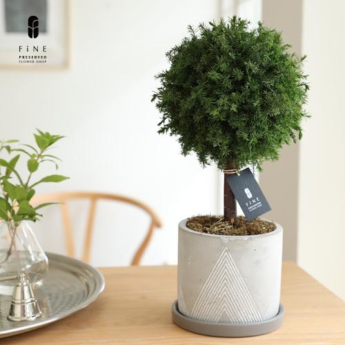 枯れない観葉植物インテリアプリザーブドグリーン/グリーンボールトピアリーギフト枯れない観葉植物インテリア
