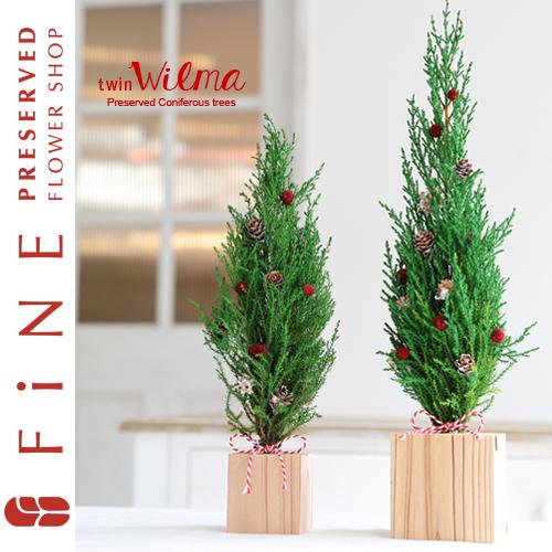 枯れない観葉植物/コニファー/ゴールドクレスト/ウィルマ/ミニツリー
