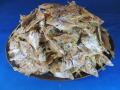 【レア煮干し限定品】ヒイラギ煮干し 7.5kg