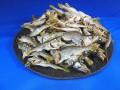 【レア煮干し:限定品】クロムツ煮干し 4.5kg