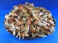 【レア煮干し:限定品】念仏鯛煮干し 5.5kg
