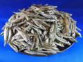 【レア煮干し:現品限り】トウゴロウイワシ煮干し 8kg