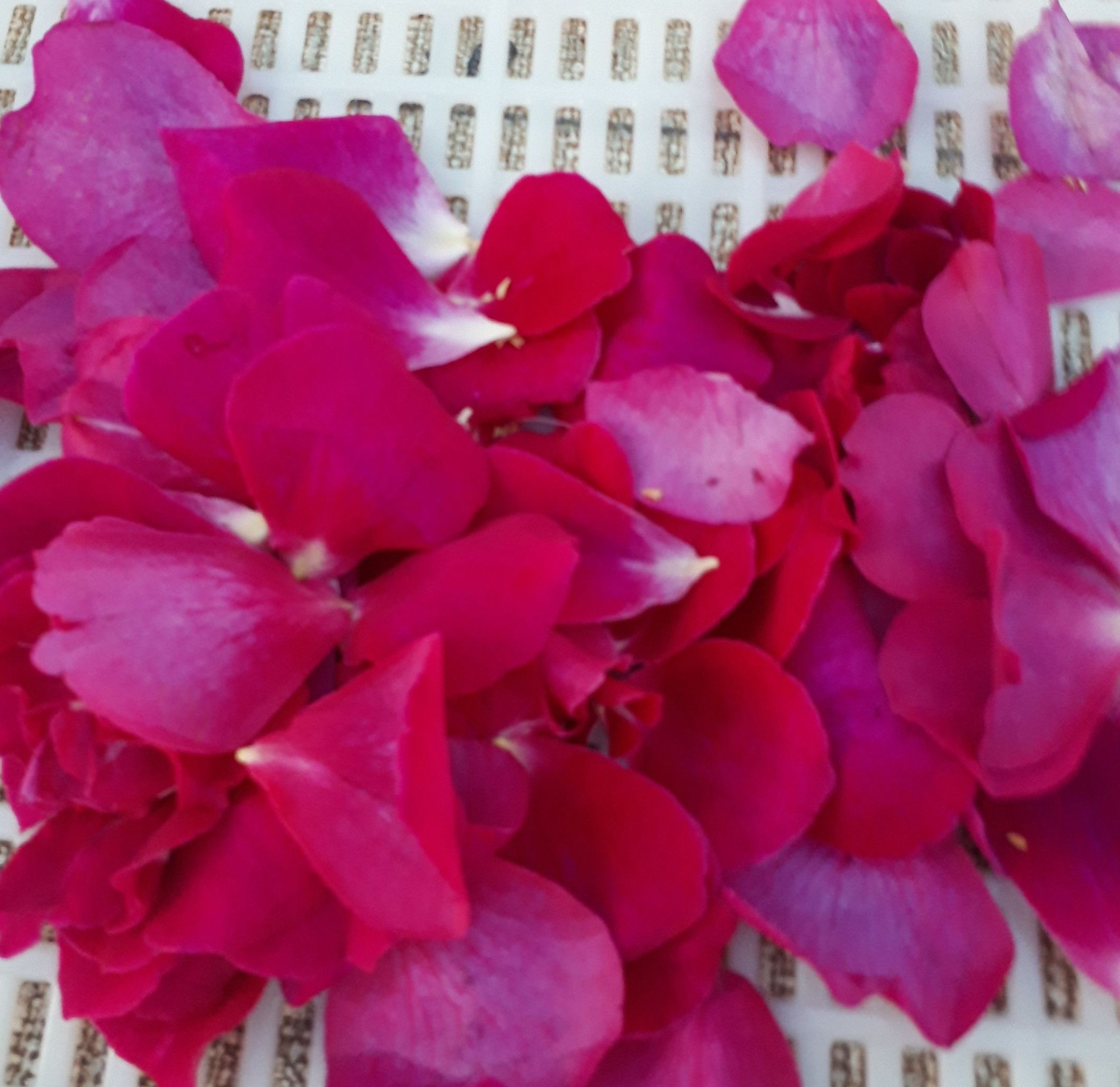 花びら写真