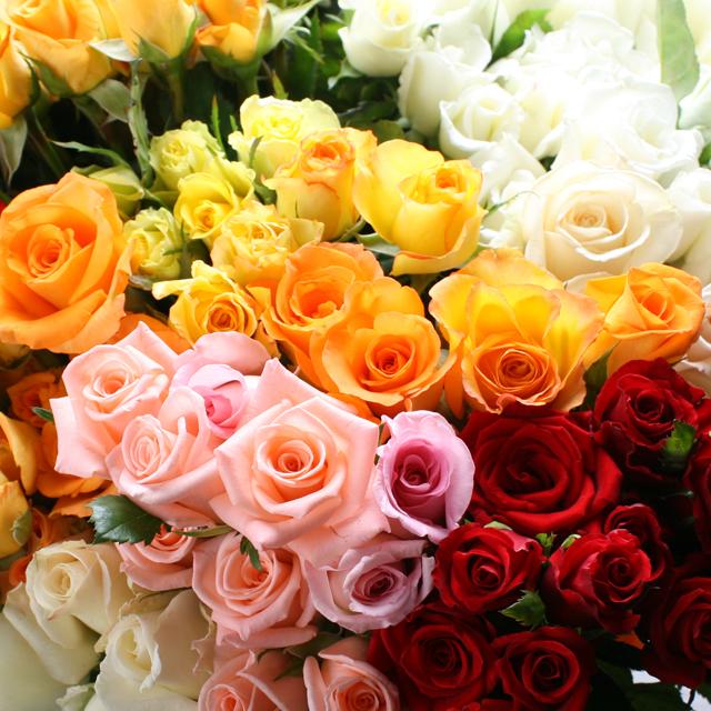 混色お任せ、本数指定の薔薇だけ花束(1本150円)(生花)◆