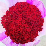 赤バラ250本