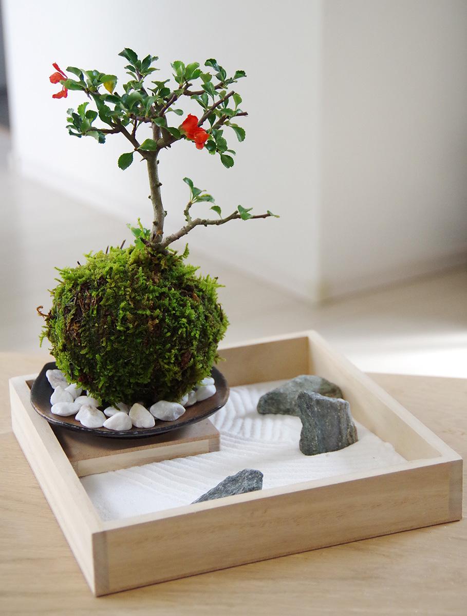 【枯山水×苔玉】~枯山水セット(三波石)小サイズ+紅長寿梅の苔玉器セット