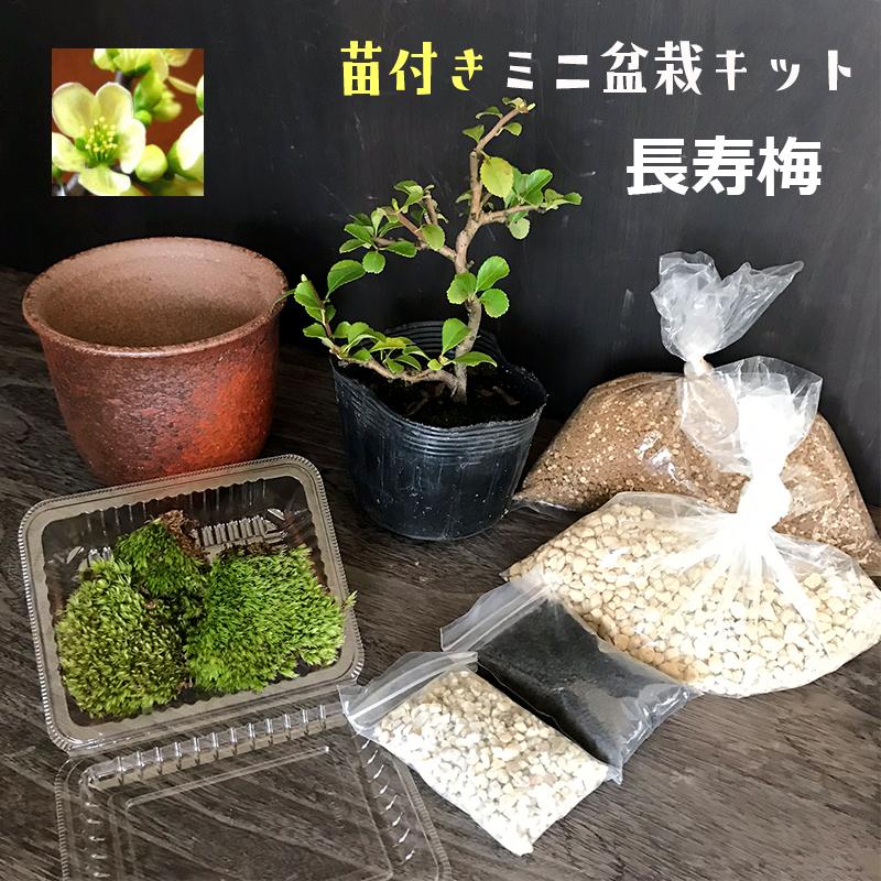 盆栽キット