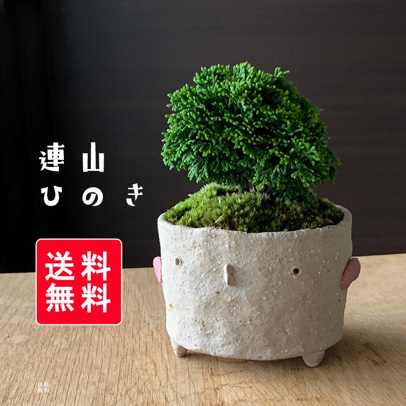 送料無料 連山ヒノキのミニ盆栽 鉢 真山茜