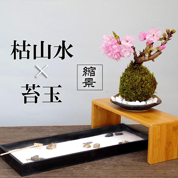 【枯山水×苔玉】〜枯山水(龍安寺)+旭山桜苔玉器・天然孟宗竹飾り台セット