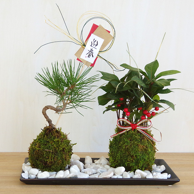 黒松ヤブコウジ苔玉2016m
