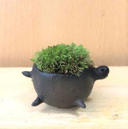 苔盆栽 亀
