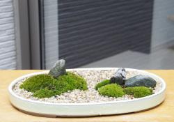 苔盆栽20160229m