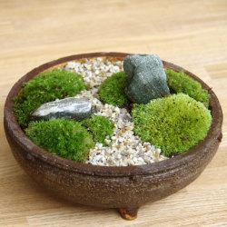 苔盆栽信楽焼鉢2016