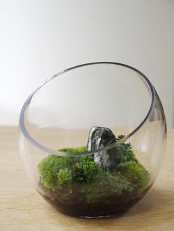 小さな苔の世界【苔テラリウム ボール】