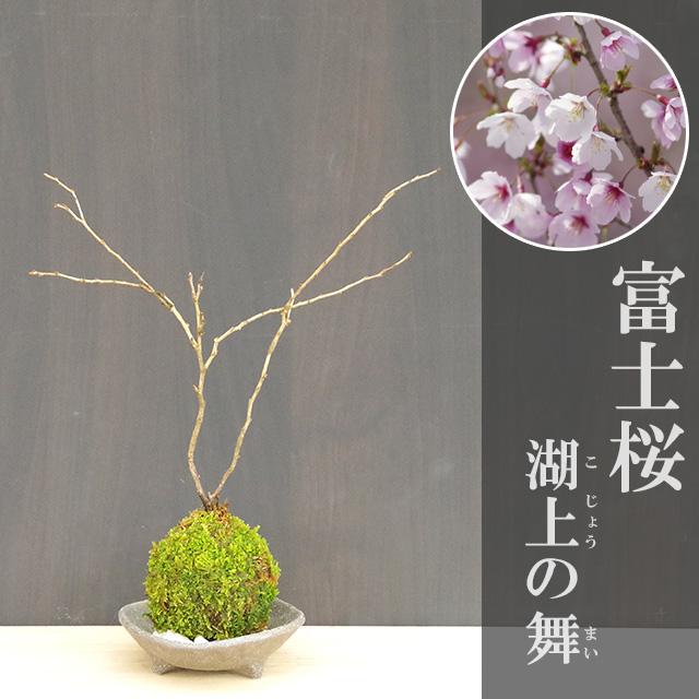 富士桜苔玉三つ足灰器2017m