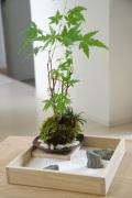【枯山水×苔玉】~枯山水セット(三波石)小サイズ+ヤマモミジ苔玉器セット