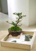 【枯山水×盆栽】〜枯山水セット(三波石)小サイズ+紅長寿梅盆栽