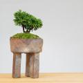 連山檜盆栽