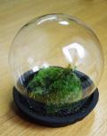 小さな苔の世界【苔盆栽(ガラスドーム付)】