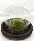 苔盆栽ドーム
