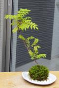 ナナカマド苔玉楕円白粉引器2016m