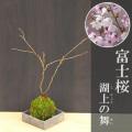 富士桜苔玉焼締角器2017m