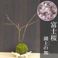 富士桜苔玉信楽焼白三つ足器2017m