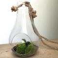 小さな苔の世界【苔テラリウム ハンギングライト】