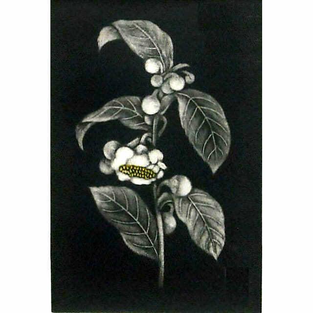 小泉淳作「茶の花」銅版画。黒い背景に浮かぶ一輪の茶の花。小さな白い花とつぼみを描いた作品。