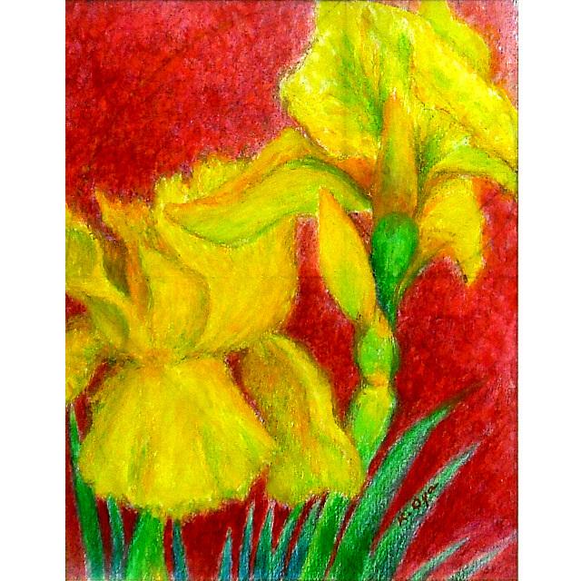大矢邦昭の絵、あやめのめざめ。赤い背景に美しい黄色のあやめ。マドリードに住む画家の家に咲いている花。