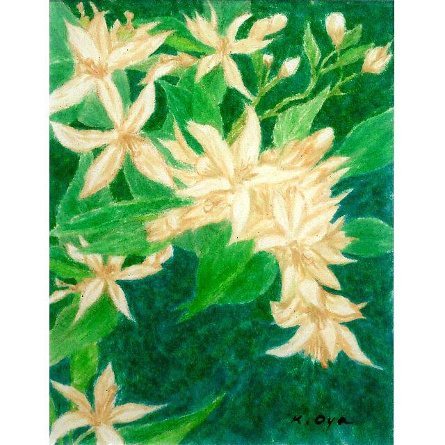大矢邦昭の絵、アサール。緑を背景に、白く可憐な花。スペインではレモンやオレンジの花をアサールと呼ぶ。
