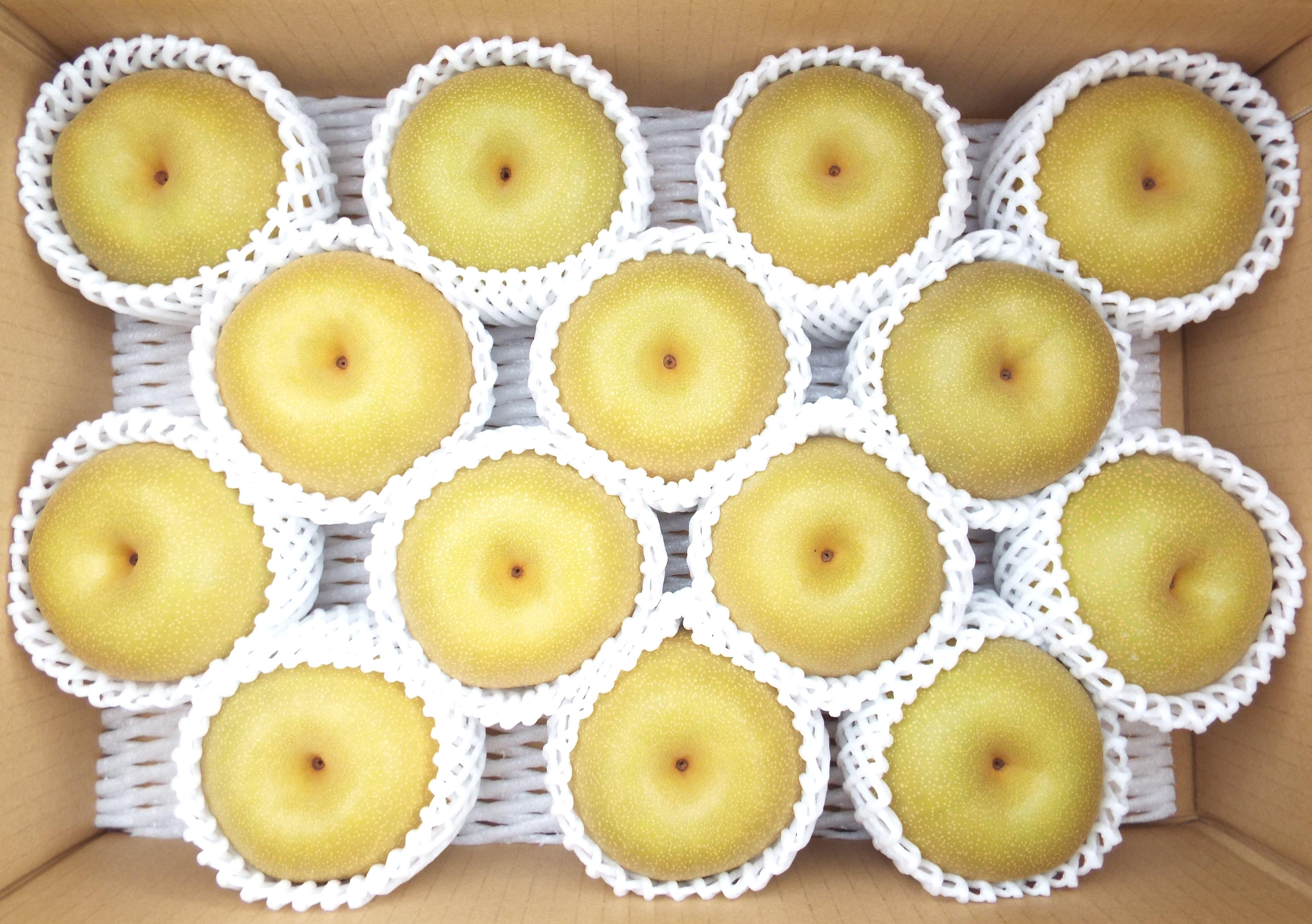 【全国どこでも送料無料!】化学肥料を使わない果物づくり!フルーツファームこんの梨たっぷり5kg♪