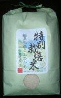 いわきの特別栽培コシヒカリ精米5kg【安島農園】食べ比べコンテスト1位の実績あり!