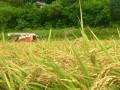 ★単品★新米(令和元年産)五百川2kg【二本松農園】