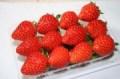 ★単品★1パックずつ買える! いちご「とちおとめ」〜福島市 八巻光〜今年は特に味がのっている。