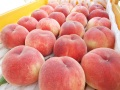 【2021予約販売】化学肥料を使わない果物づくり!フルーツファームこんの「桃2kg」