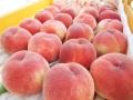 【2020予約販売】化学肥料を使わない果物づくり!フルーツファームこんのの「桃5kg」
