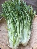 ★単品★ 鍋の季節に「みず菜」  〜1袋から買えます〜